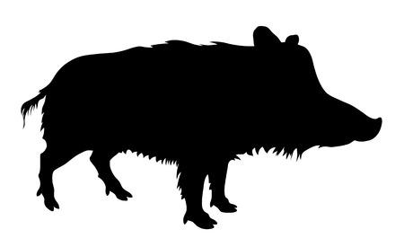 jabali: Vector illustratin desde silueta cerdo salvaje