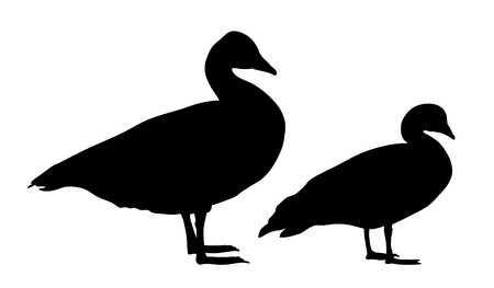 wild duck: Vector illustration of wild geese silhouettes