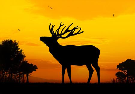 herd deer: Male deer silhouette on sunset background