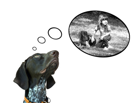 persona pensando: Imagen conceptual del puntero de pelo corto alemán soñar con la diversión con su amigo Foto de archivo