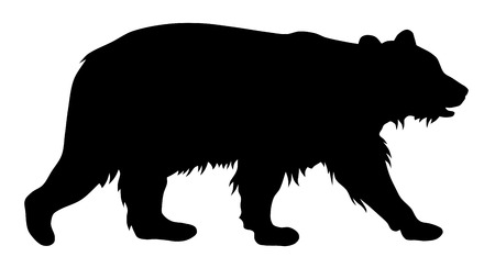 carnivorous animals: Vector illustration of brown bear silhouette