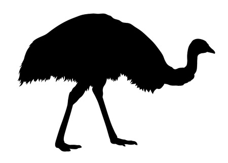 emu: Vector illustration of emu silhouette
