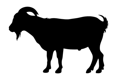 domestic goat: Vector illustration of goat silhouette