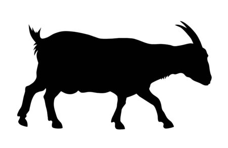 domestic animals: Vector illustration of goat silhouette