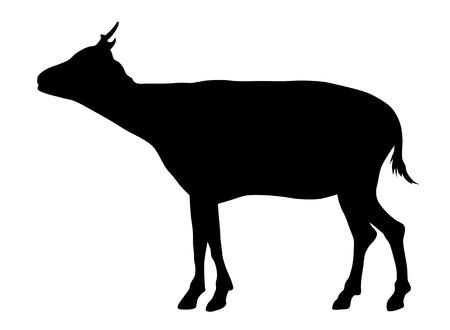 herbivorous animals: Vector illustration of african goat silhouette Illustration