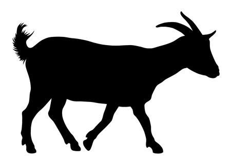 cabras: Ilustración del vector de la silueta de la cabra