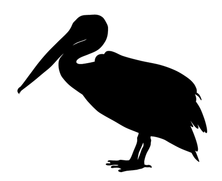waterfowl: Vector illustration of pelican silhouette