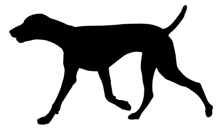 pointers: Vector illustration of german short hair pointer silhouette