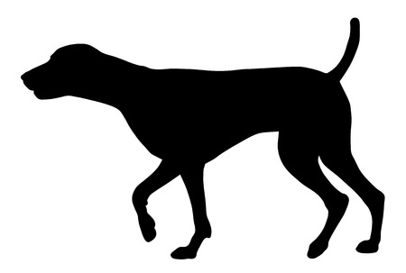 Vector illustration of german short hair pointer silhouette
