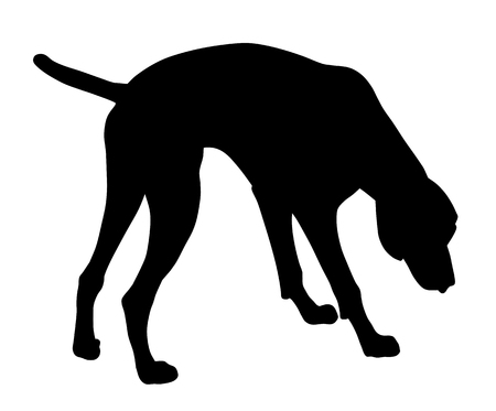 hunting dog: Vector illustration of german short hair pointer silhouette