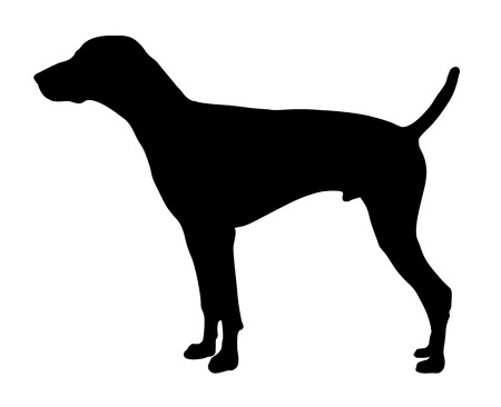 short: Vector illustration of german short hair pointer silhouette