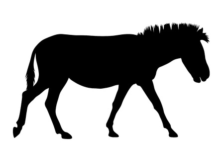 herbivorous animals: Vector illustraton of zebra silhouette
