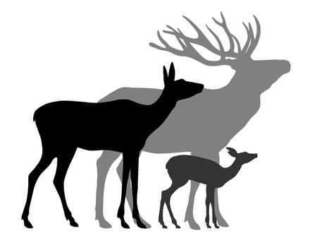 hind: Vector illustration of deers family silhouettes over white background