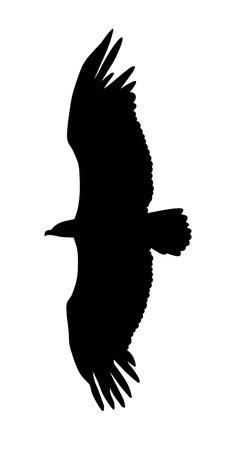 eagle flying: illustration of flying eagle silhouette