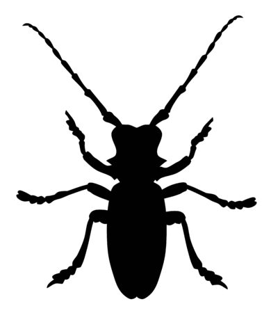 Vector illustration of morimus funereus beetle silhouette Illustration