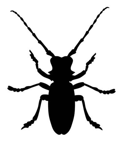 Vector illustration of morimus funereus beetle silhouette Ilustrace