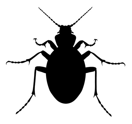 Vector illustration of carabus coriaceus beetle silhouette Illustration