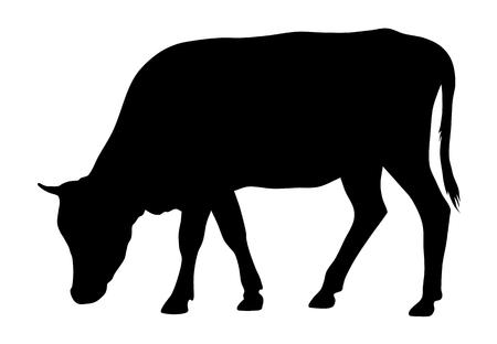Vektorillustration der Kuhschattenbild