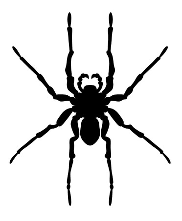 Vector illustration of spider silhouette on white background Ilustrace