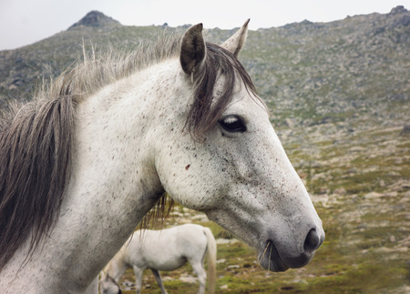 Close up of white horse head