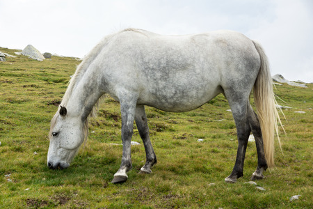 White horse on meadow background