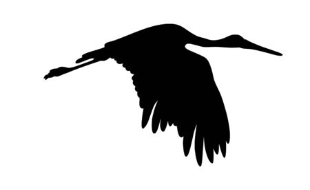 Vector illustration of flying stork silhouette