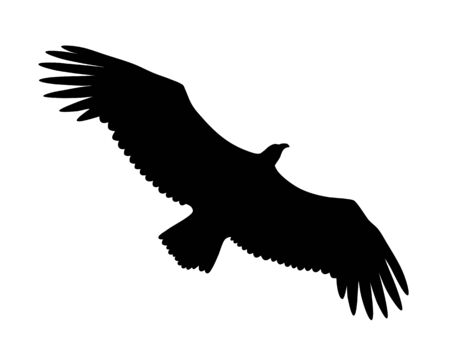Vector illustration of flying Griffon vulture  silhouette