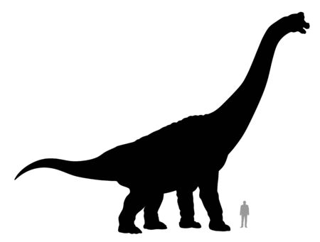 Vector illustration of silhouette of dinosaur brachiosaurus compared to a 1.80 m tall person.