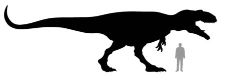 Vector illustration of silhouette of dinosaur Gigantosaurus compared to a 1.80 m tall person.