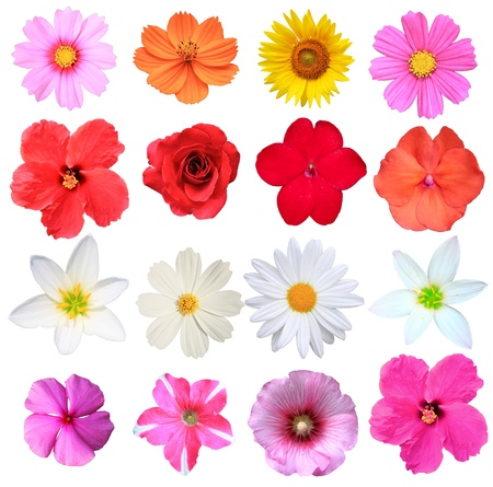Flowers isolated on white stock photo  photo
