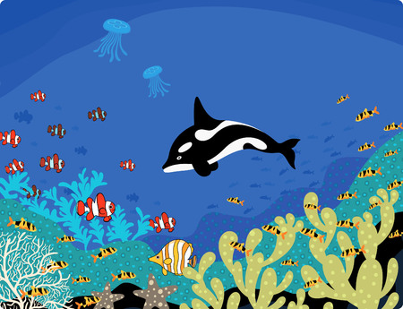 ocean life: Australia Ocean Life