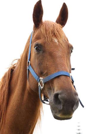 inquiring: inquiring horse Stock Photo