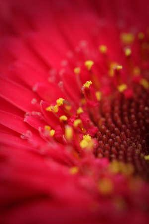 filaments: Closeup flower stigma, pollen, filaments