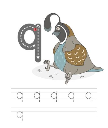 Learning to write a letter - q. A practical sheet from a set of exercises game for kids. Cartoon funny bird with letter. Spelling the alphabet. Child development and education. Quail - Vector. Ilustração