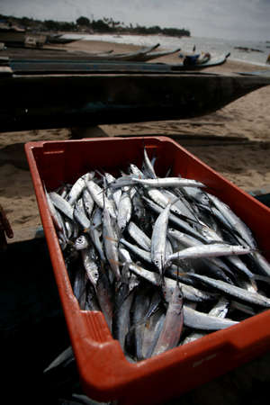 agulhinha fish is seen in an artisanal fishing boat on Itapua beach, in the city of Salvador.