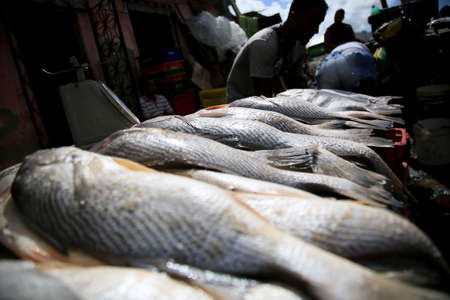 fish for sale in the region of Sao Joao do Cabrito, in Salvador. Fish and seafood are sold on site. Stockfoto