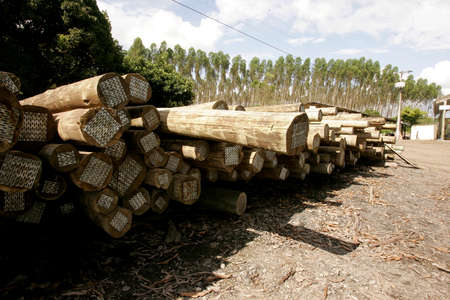 Autoclave treated eucalyptus wood, making the wood immunized and resistant to fungi, termites, moisture and other deteriorating agents.