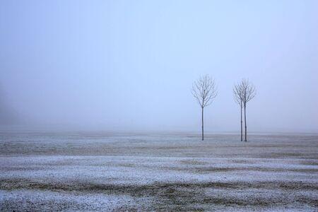 Three trees in a foggy snowy field in winter