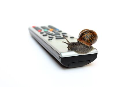 Common garden snail Helix Aspersa on tv remote control isolated Stock Photo