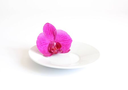 Pink orchid flower on plate isolated on white Stock Photo