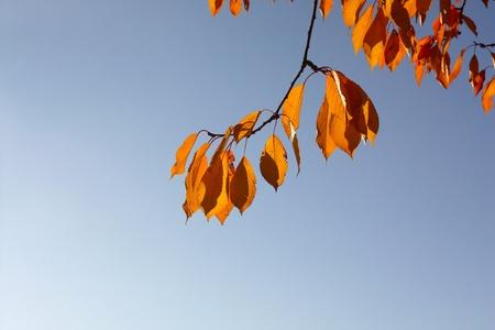 browning: Autumnal foliage