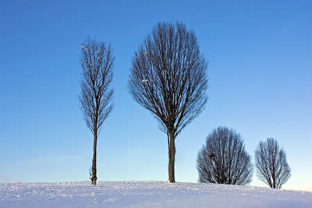 Group of trees on the snowy hill with blue sky background photo