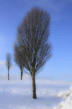 Vertical winter landscape with a few trees on the snow covered hill Stock Photo