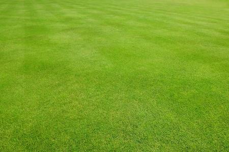 lawns: Diagonally striped green grass sports field Stock Photo