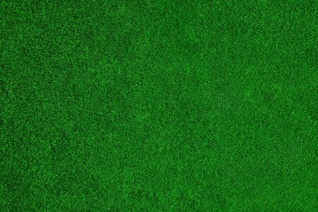 Green grass like a carpet