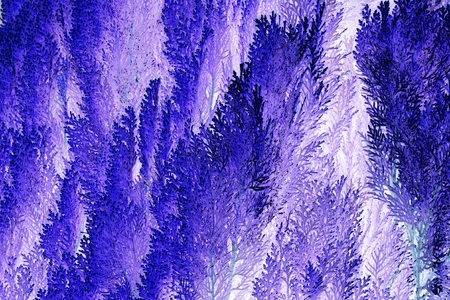 hedging: Violet foliage texture abstract background suitable for illustration