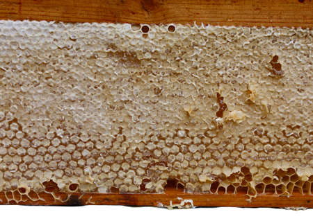 Close up of frame of honeycomb with hexagon cells full of honey  Stok Fotoğraf