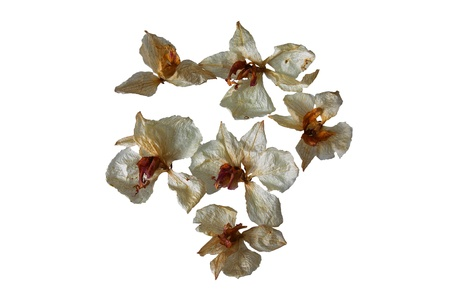Group of white dried orchid flowers isolated on white background Stok Fotoğraf