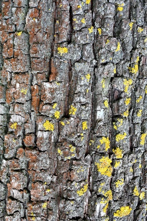 Gray grey aged tree surface, vertical shot Stok Fotoğraf