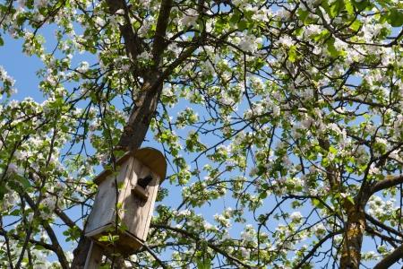 オープン黄色いくちばしと頭の咲く庭ムクドリのツリー トランクに固定されているネスト ボックスに黒い鳥が鳥の家は外にあります。